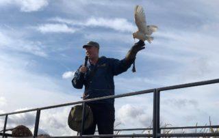 Owl Adventures Bird Show at Farmer Copleys Pumpkin Festival.