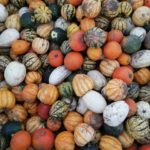 Different varieties of pumpkin at Farmer Copleys