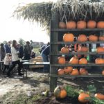 Pumpkin festival at Farmer Copleys