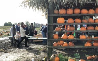 Pumpkin festival at Farmer Copleys