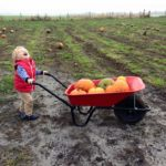 Child with wheelbarrow full of pumpkins.
